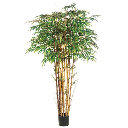 Bambo decorativo 6ft